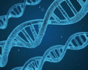 Mit den richtigen Genen zum Leader?