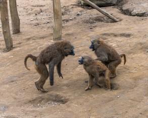 Die Biologie des Streitens